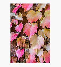 Autumn Leaves - Uralla NSW Australia Photographic Print