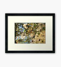 bush colours Framed Print