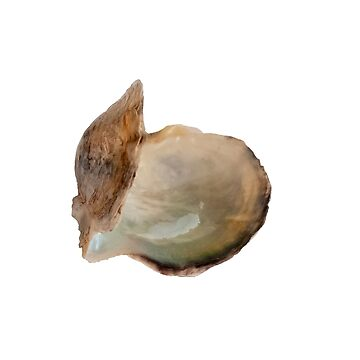 Open double clam shell still held together on white background by PhotoStock-Isra