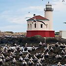 Pelicans at North Jetty Light House, Bandon, Oregon by Albert Dickson