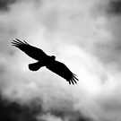Flight by ElocinMuse