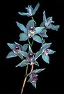 orchids  by Juilee  Pryor