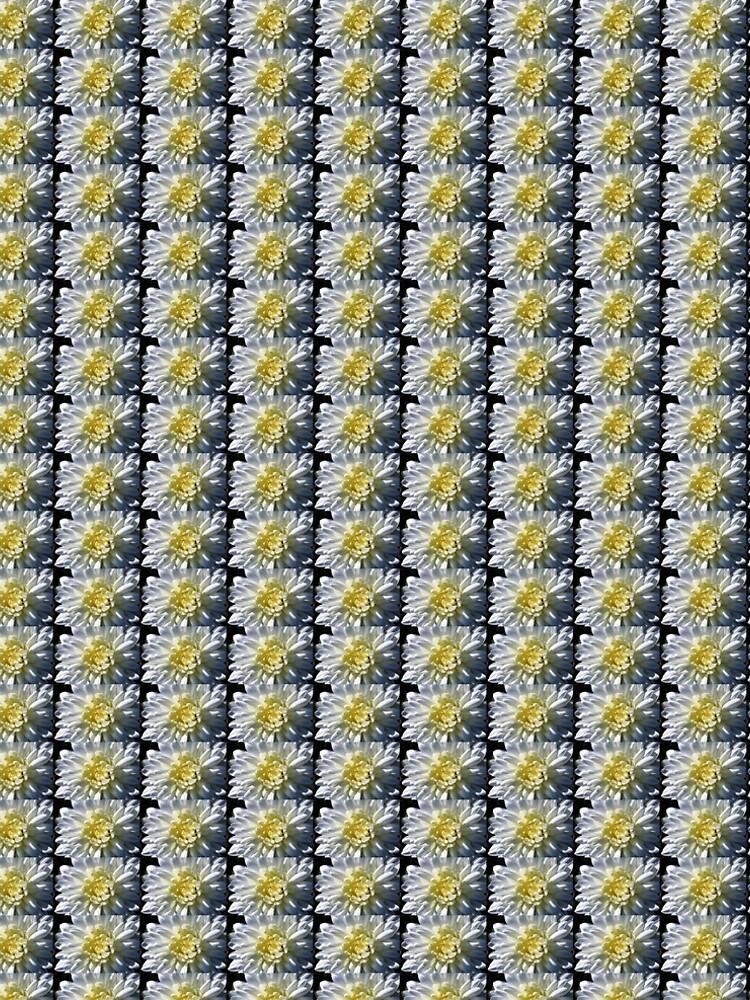 Chrysanthemum In Sunlight by wselander