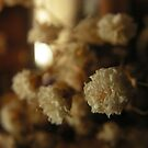 For the Love of Gypsophila  by lissygrace