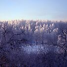 Frost everywhere by Antanas