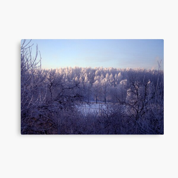 Frost everywhere Canvas Print