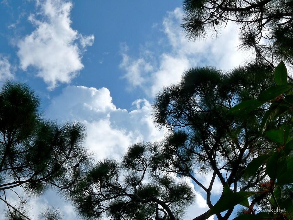 Sky of Pine by skyhat