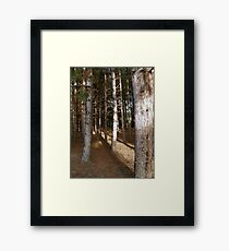 Pine Trees in the Late Afternoon on the Norfolk Coast Framed Print