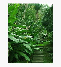 Stairs in the jungle Photographic Print
