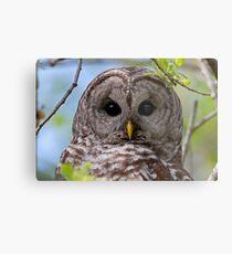 Barred Owl at McGregor Marsh Metal Print