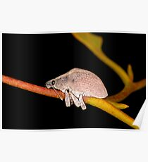 Cute Beetle on a Gum Twig Poster