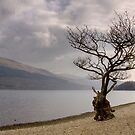 Late Afternoon at Firkin Point, Loch Lomond by Christine Smith