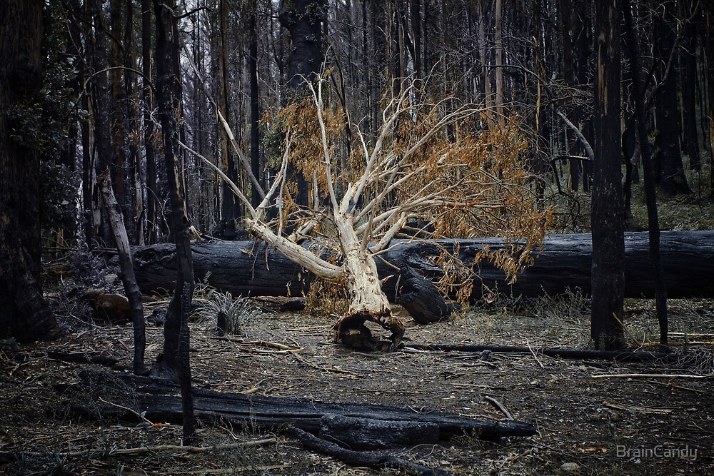 Marysville - Forest II by BrainCandy