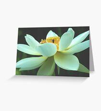 Nelumbo nucifera  Greeting Card