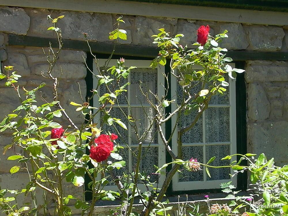 cottage window, Ross, Tasmania by BronReid
