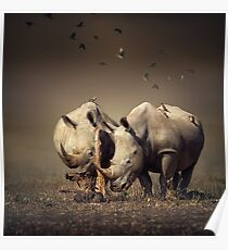 Two Rhinoceros with birds Poster