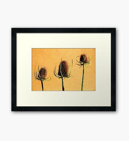 Teasels Framed Print