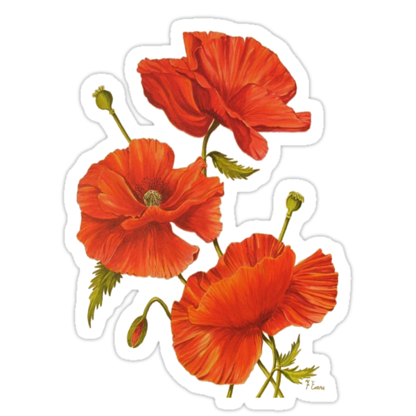 Poppies by FranEvans