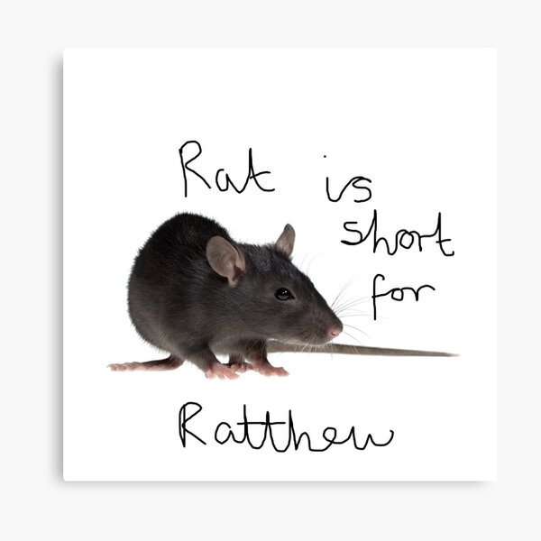 Rat is short for ratthew Canvas Print