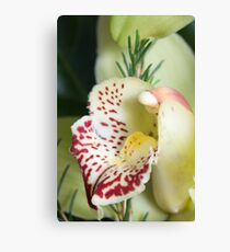 Orchide Canvas Print
