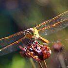 Golden Wings of A Dragonfly von Jo Nijenhuis