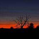 Blue Sunset by Julia Washburn