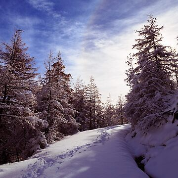 Sunny day in the alps after the snowfall by zakaz86