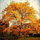 Tree with Autumn Hue Colours  by Seller2018KF