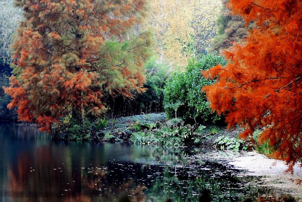 Autumn Wonderland by NJMphotography
