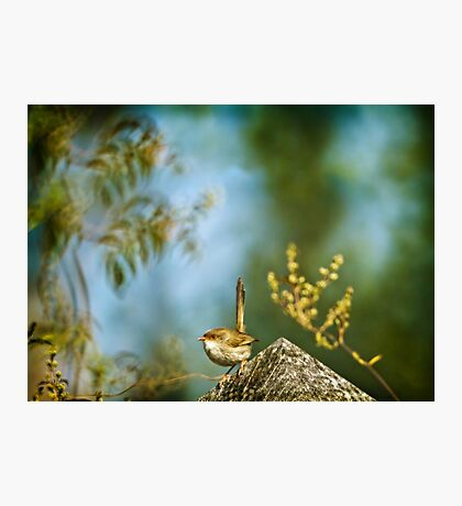 ~ a visitor in the garden ~ Photographic Print