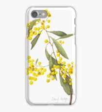 Acacia pycnantha - Golden Wattle iPhone Case/Skin