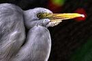 White bird by LudaNayvelt