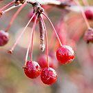 Berries Three by rabeeker