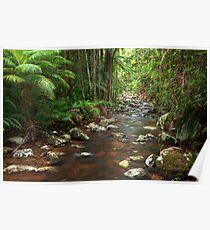 Rainforest Stream, Nightcap National Park Poster