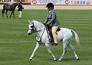 Grey Show Pony by Jenny Brice