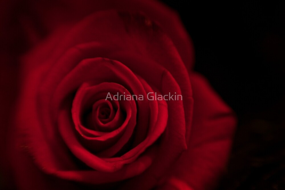 Happy Anniversary ♥ by Adriana Glackin