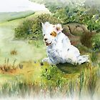 A Clumber Spaniel in the field by JAN IRVING