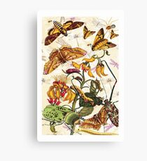 Insect Life Canvas Print