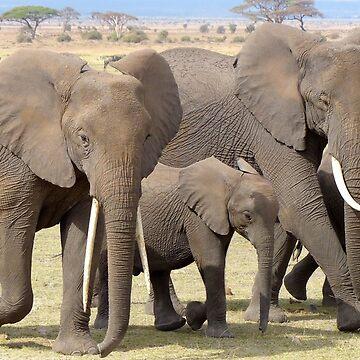 Elephants by franceslewis