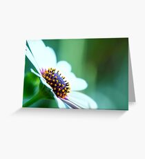 untitled xvii Greeting Card