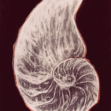 Shell on black by BarbarianBarBar