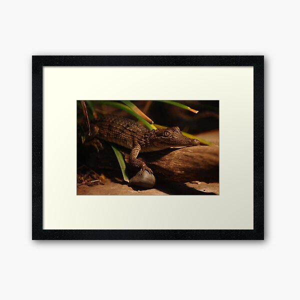 Crocodile Looking At You Too Framed Art Print