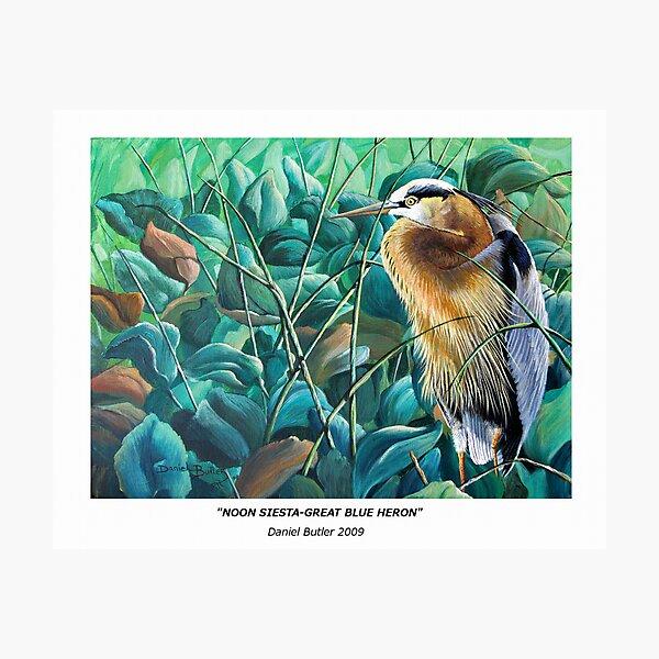 """Noon Siesta-Great Blue Heron"" Photographic Print"