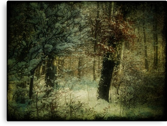 Colors of Winter by © Kira Bodensted