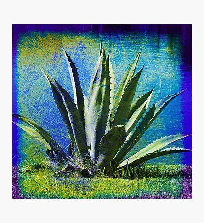 Aloha Blue Photographic Print