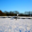 Barbed Wire In Winter by rharvey