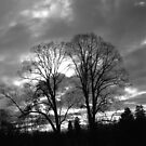 Trees in Black and White by ©The Creative  Minds