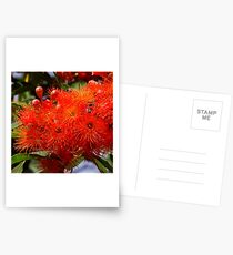 Flowering Gum Postcards