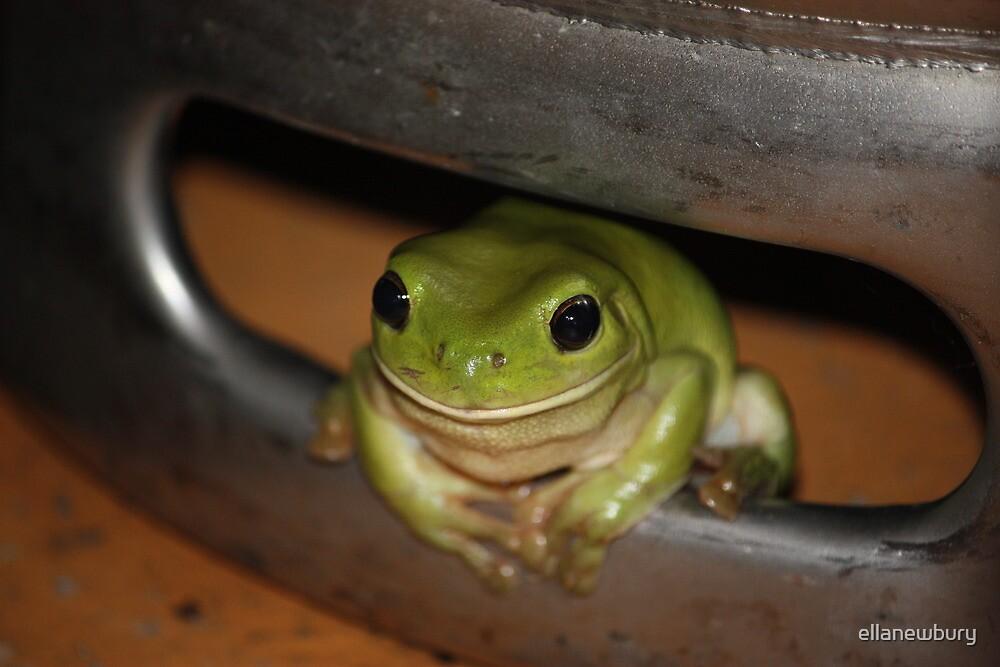 Green Frog in Beer Barrel by ellanewbury