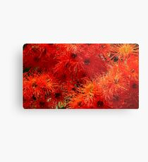 Flowering Gum Metal Print